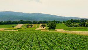 agricultura-sustentavel