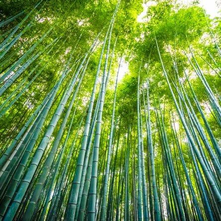 Palito e Espeto de Bambu
