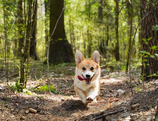 produtos sustentáveis para pets